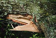 Storm_Damage_4-28-11_021.JPG