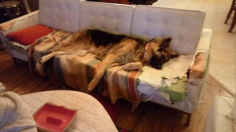 Duke_couch
