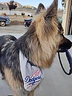 Dodger_Dog.jpg