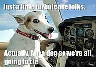 Dog_Pilot.jpg