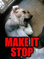 Funny-Stop-Meme-Make-It-Stop-Picture.jpg