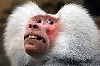 Very-Funny-Animal-Faces-28-640x424.jpg