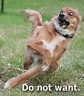 do-not-want-dog.jpg