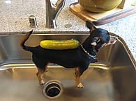 pickle_dog.jpg