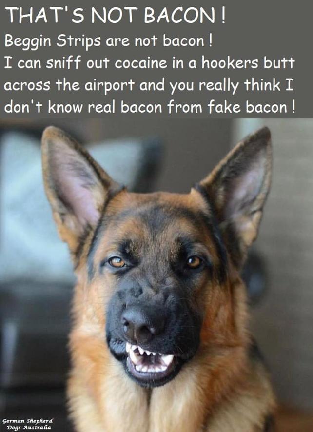Name:  bacon.jpg Views: 117 Size:  64.9 KB