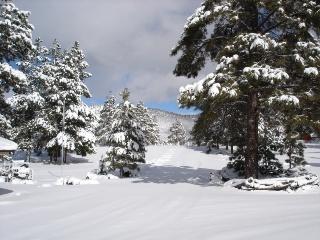 Name:  Copy 50%  of Snowy Cielo up the lane 2.jpg Views: 584 Size:  44.7 KB